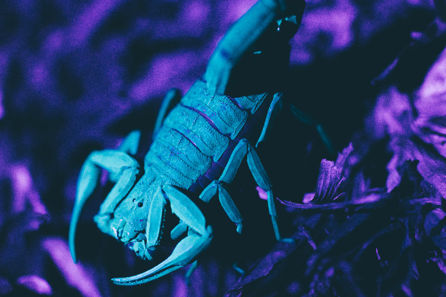 eco kids summer camp 2019 night hike scorpion