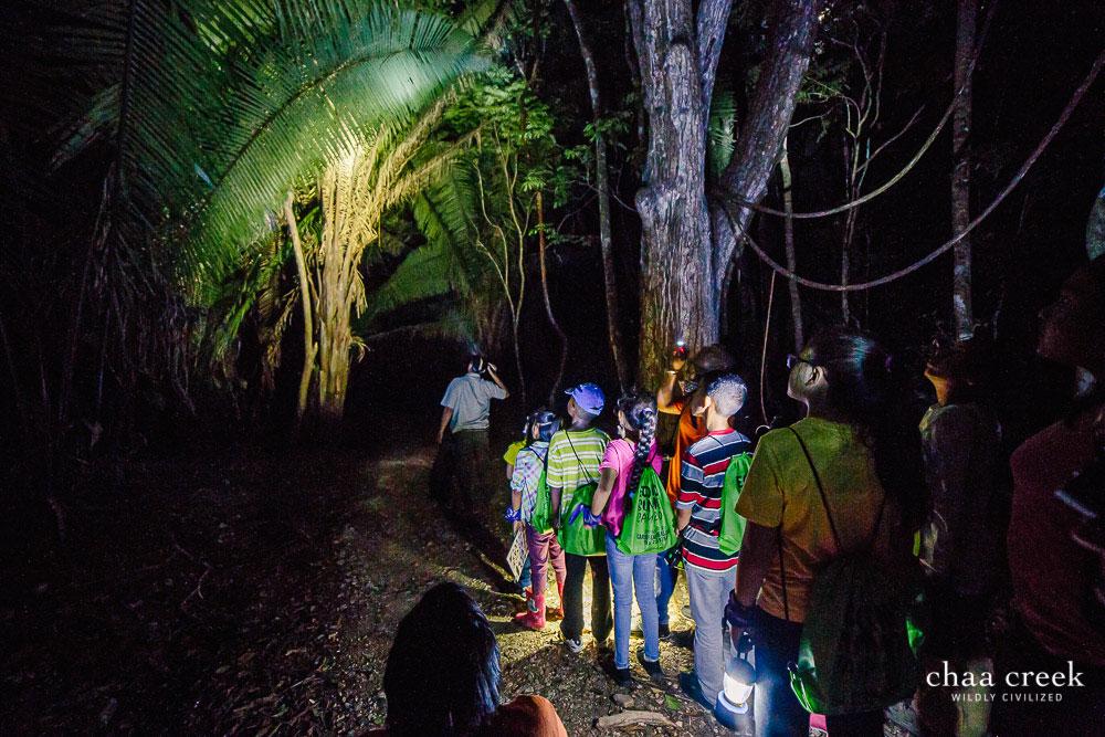 Eco Kids Summer Camp 2019 night hike trail