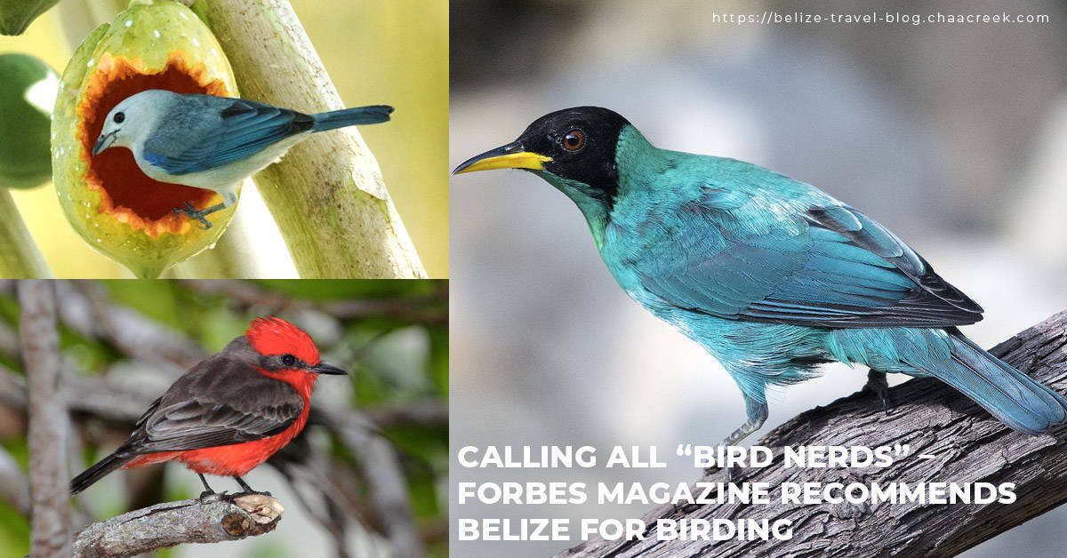 forbes names belize top 5 birding destinations 2020